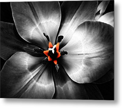 Black And White With A Glow Of Color Metal Print