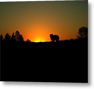 Black Bear Sunset Metal Print