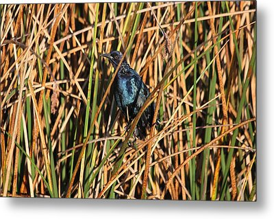 Metal Print featuring the photograph Black Bird by Jeanne Andrews