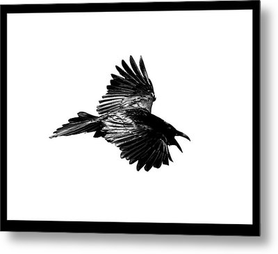 Black Bird Number 1 Metal Print