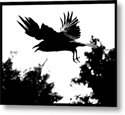 Black Bird Number 2 Metal Print