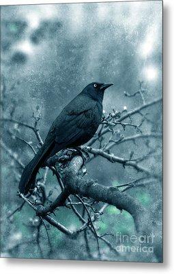Black Bird On Branch Metal Print by Jill Battaglia
