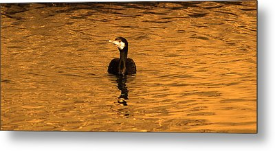 Black Bird On Surise Metal Print by Radoslav Nedelchev
