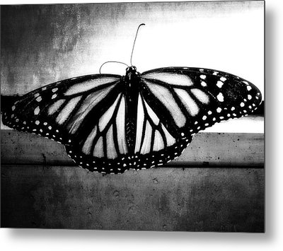 Metal Print featuring the photograph Black Butterfly by Julia Wilcox