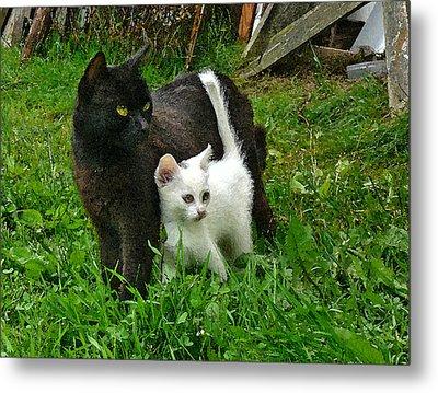 Black Cat Defends His White Kitten Metal Print by Aleksandr Volkov