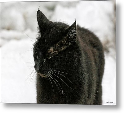 Metal Print featuring the photograph Black Cat White Snow by Chriss Pagani