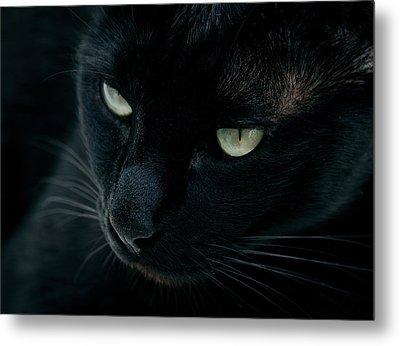 Black Panther Metal Print by Laura Melis