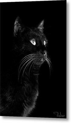 Black Portrait Metal Print by Raffaella Lunelli