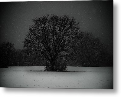 Black Snow Tree Metal Print by Sonja Quintero