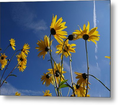 Blackeyed Susans Metal Print by Bruce Ritchie