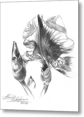 Blooming Iris  Metal Print