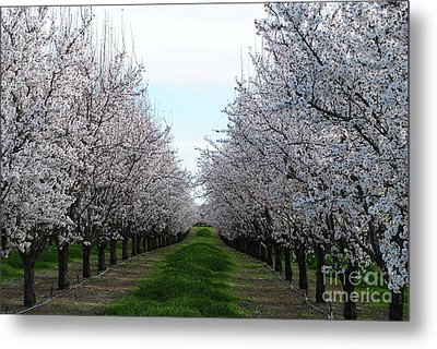 Blooming Orchard Metal Print