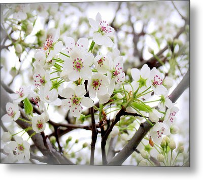 Metal Print featuring the photograph Blooming Ornamental Tree by Kay Novy