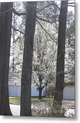 Blooming Tree Metal Print by Marlene Robbins