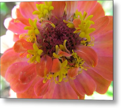 Metal Print featuring the photograph Blooming Within by Tina M Wenger