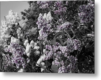 Metal Print featuring the photograph Blooms by Colleen Coccia