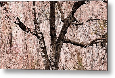 Blossom Rain Metal Print by Deborah  Crew-Johnson