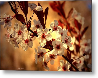 Blossoms 3 Metal Print by Mikki Cucuzzo