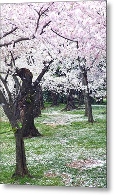 Blossoms Of The Heart Metal Print by Mitch Cat