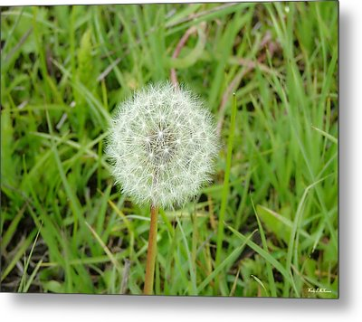 Metal Print featuring the photograph Blow A Wish by Wendy McKennon