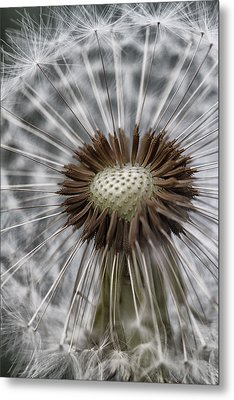 Blowin' Free... Metal Print
