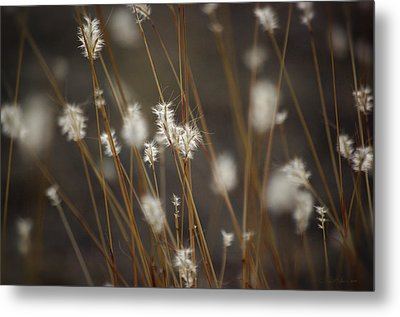 Metal Print featuring the photograph Blowing In The Wind by Vicki Pelham