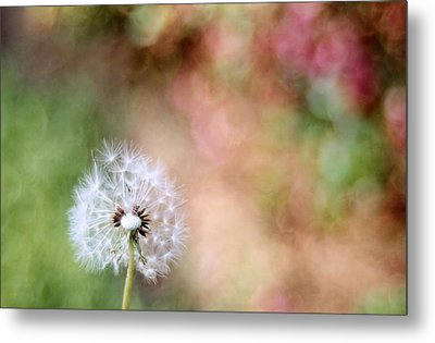 Metal Print featuring the photograph Blown Away by Lynnette Johns