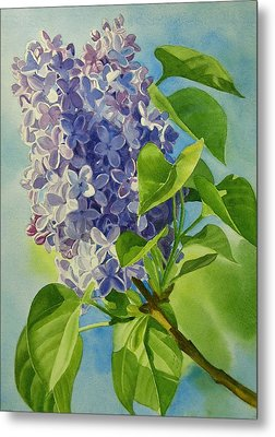 Blue And Lavender Lilacs Metal Print by Sharon Freeman