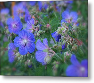 Metal Print featuring the photograph Blue Beauties by Robin Regan