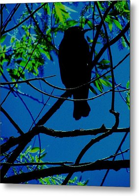 Blue-black-bird Metal Print