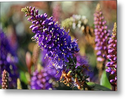 Metal Print featuring the photograph Blue Brush Bloom by Tikvah's Hope