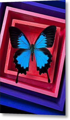 Blue Butterfly In Pink Box Metal Print by Garry Gay