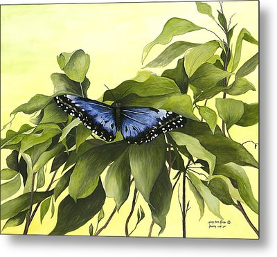 Blue Butterfly Of Branson Metal Print