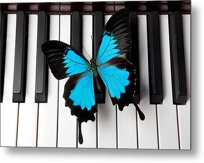 Blue Butterfly On Piano Keys Metal Print by Garry Gay