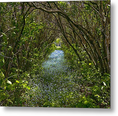 Blue Carpet In The Woods. Metal Print by Edgar Anderson