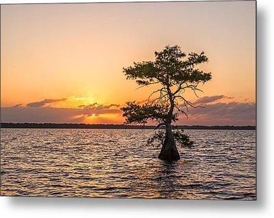 Blue Cypress Lake Sunrise Metal Print by Claudia Domenig