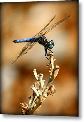 Blue Dragonfly Metal Print by Tam Graff