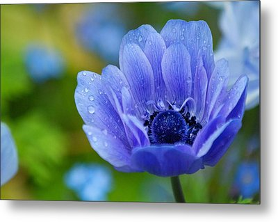 Blue Flower Metal Print by Scott Holmes