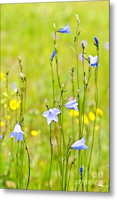 Blue Harebells Wildflowers Metal Print by Elena Elisseeva