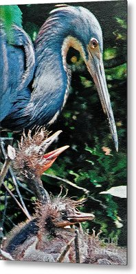 Blue Heron Family Metal Print by Lydia Holly