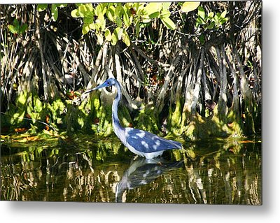 Metal Print featuring the photograph Blue Heron by Jeanne Andrews