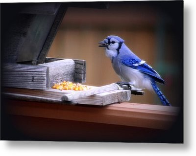 Metal Print featuring the photograph Blue Jay On Backyard Feeder by Kay Novy