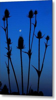 Blue Moon Thistle Metal Print by Kimberleigh Ladd