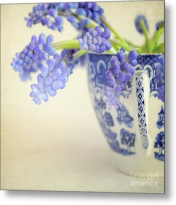 Blue Muscari Flowers In Blue And White China Cup Metal Print by Lyn Randle