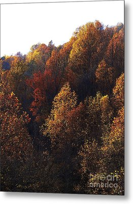 Blue Ridge 15 Metal Print by Steven Lebron Langston