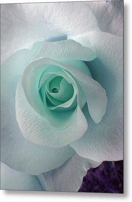 Blue Rose Metal Print by Robin Hewitt