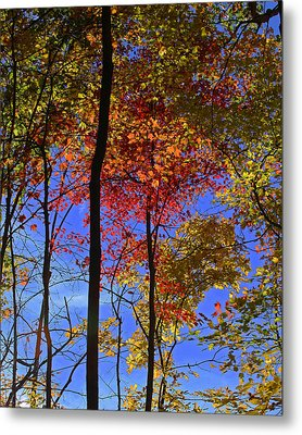 Blue Sky Autumn Metal Print