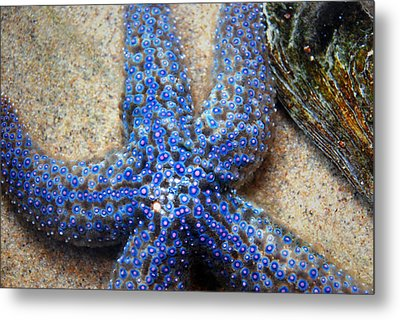 Blue Starfish Metal Print by Anthony Citro