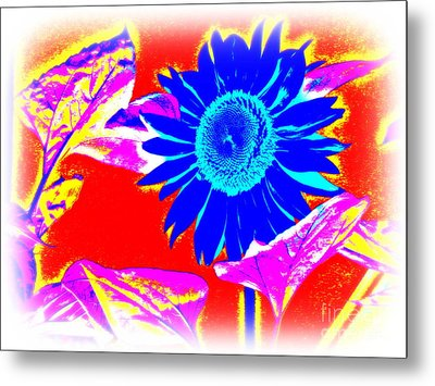 Blue Sunflower Metal Print by Pauli Hyvonen