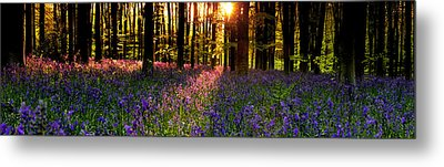 Metal Print featuring the photograph Bluebells In Morning Sun  by John Chivers